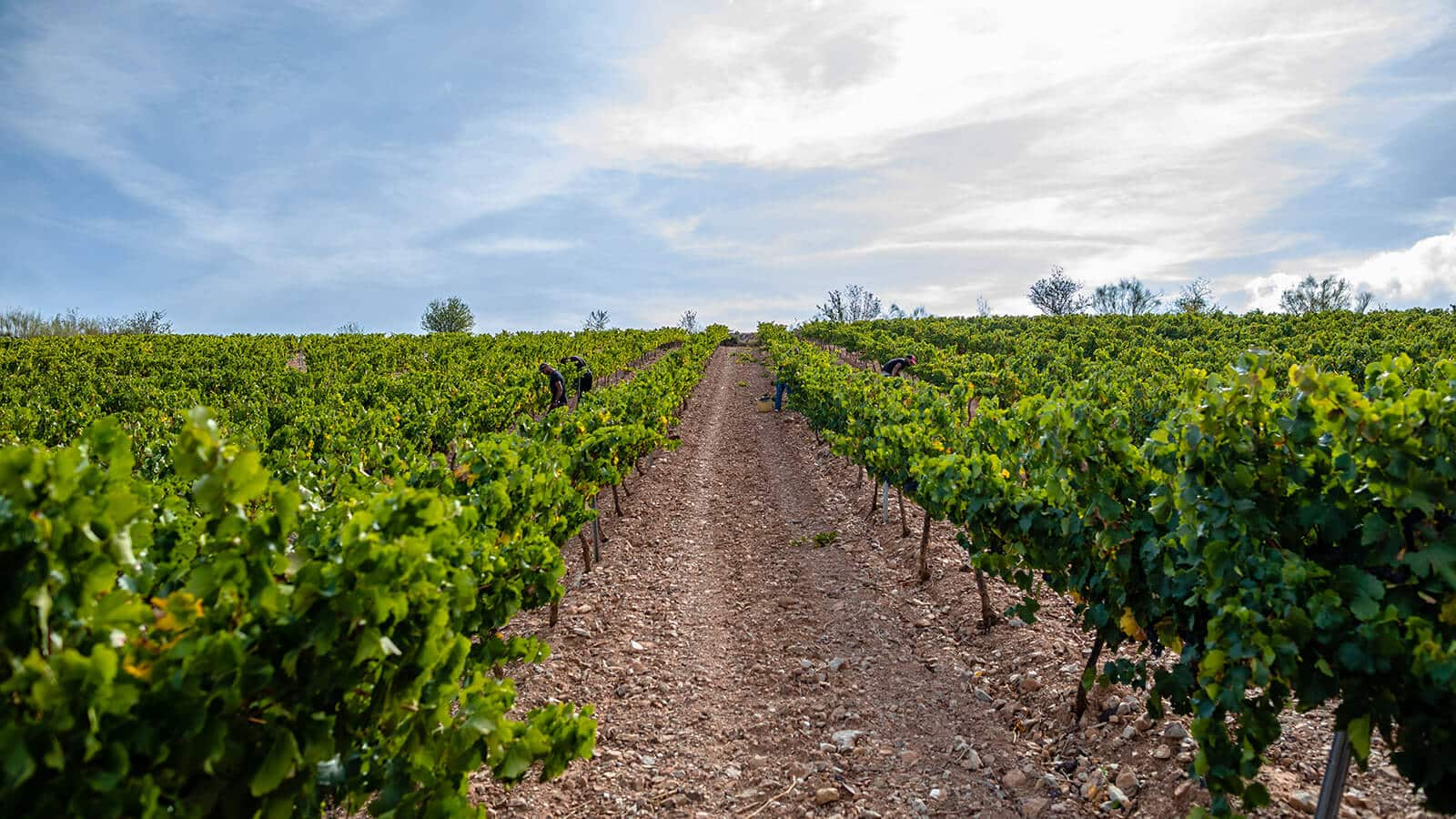 vineyards_nature_vines_wine_bodem_bodegas